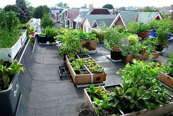Benefits of having an organic kitchen garden in your terrace